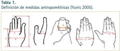 cuales son las medidas antropometricas definicion